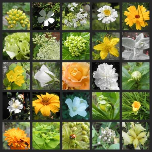 Blüten im Juni weiss gelb grün